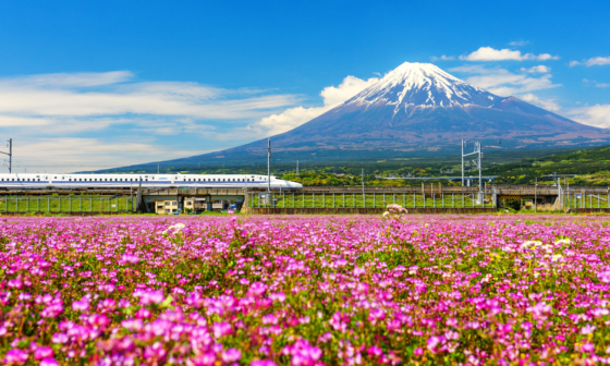 shinkansen speeding through fields of shibazakura with mt fuji in the background