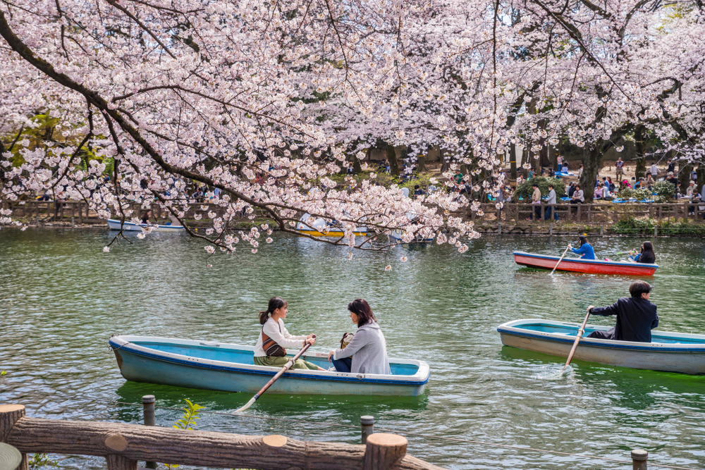 lake in inokashira park