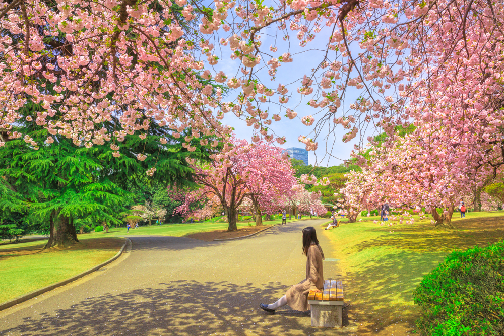 shinjuku gyoen national park during spring