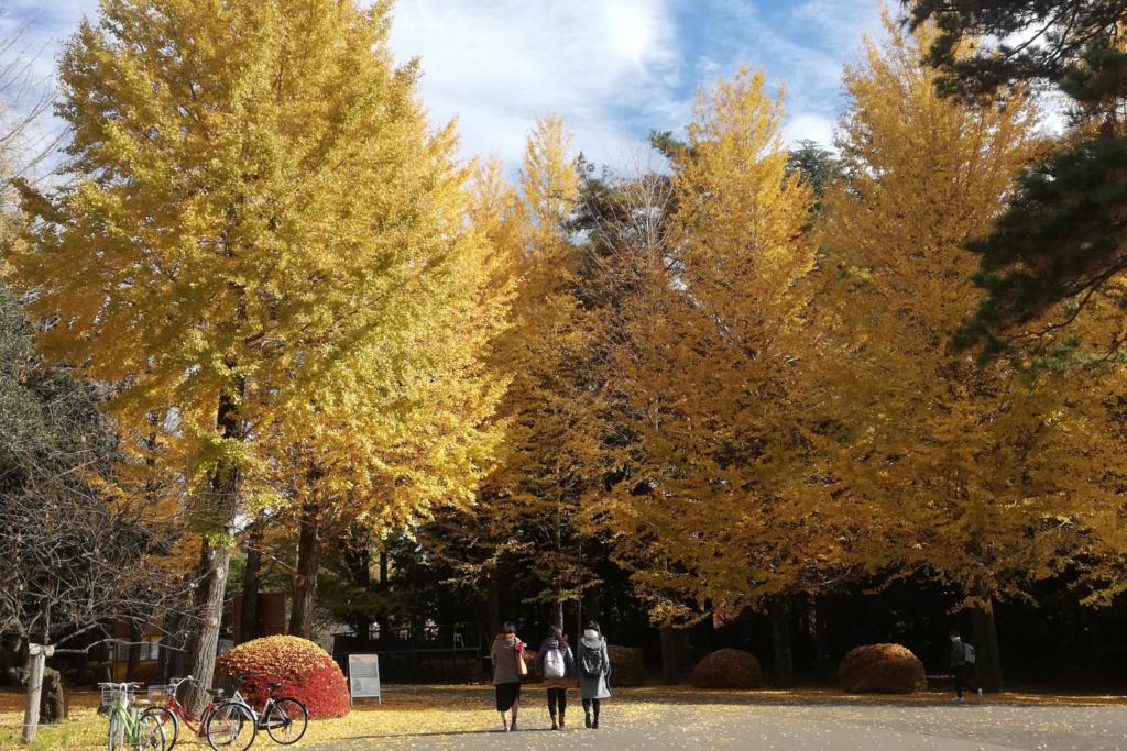 แคมปัส มหาวิทยาลัยฮิโตสึบาชิ
