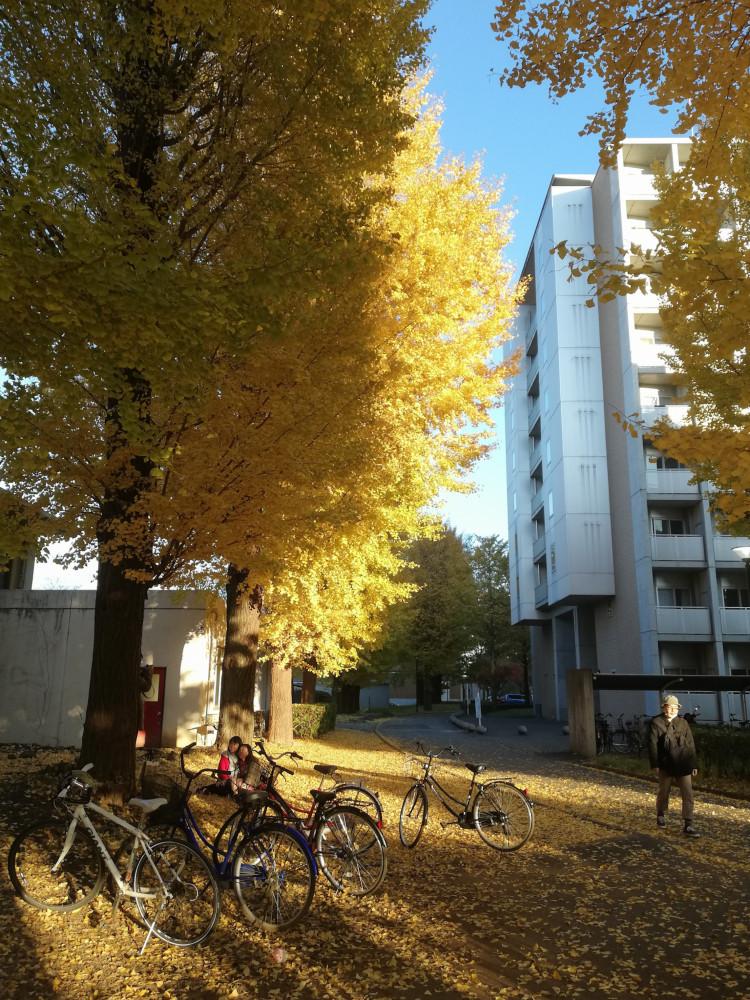 หอพักนักศึกษา มหาวิทยาลัยฮิโตสึบาชิ