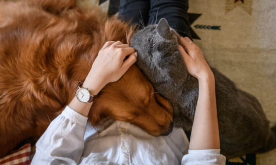 Dog and Cat Asleep on Owner's Lap