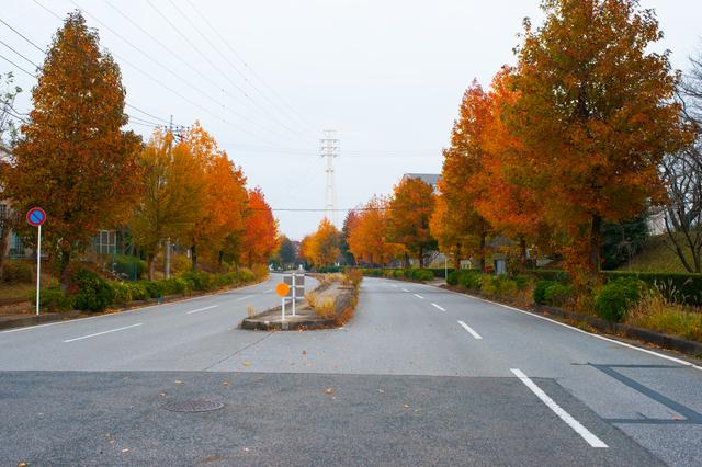Con đường lá đỏ (Momiji Road)