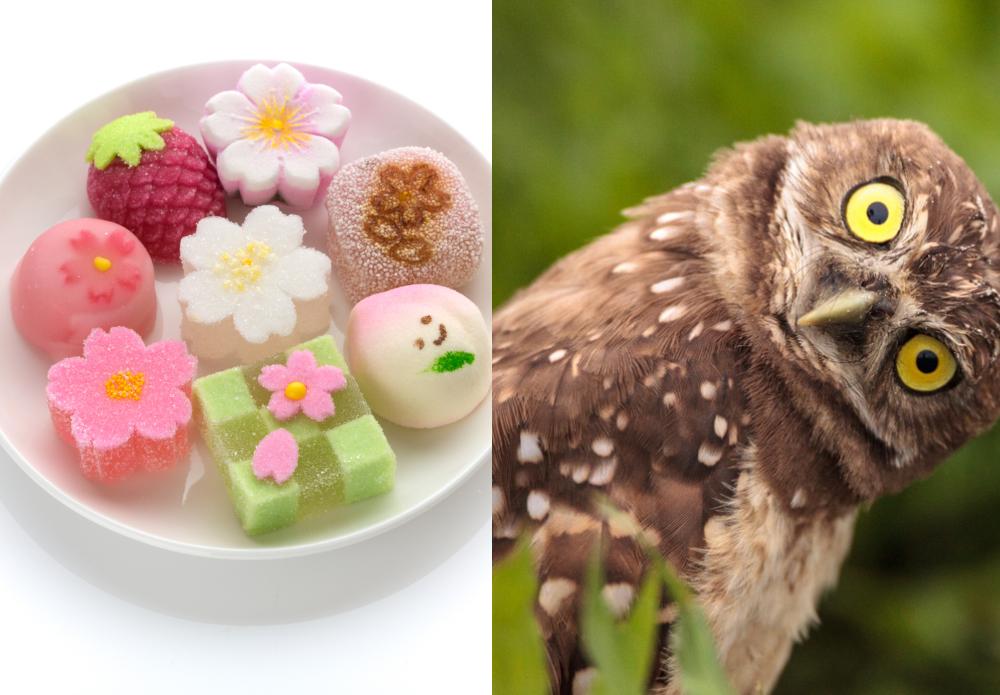 Sweets vs weird