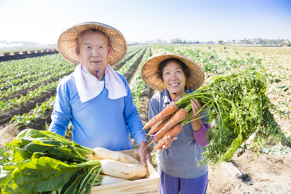 farming couple holding carrots and turnips