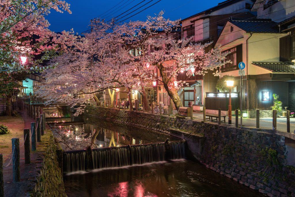 Kinosaki Onsen with sakura