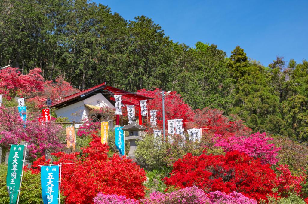godaison tsutsuji park azalea tokyo