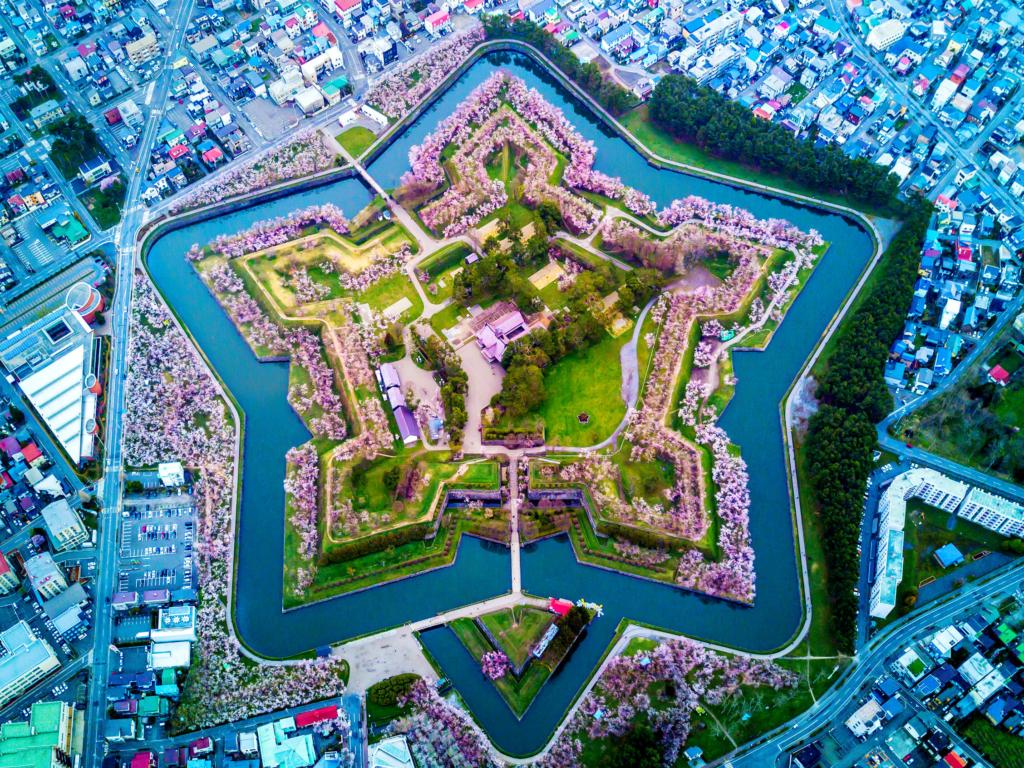 goryokaku park sakura