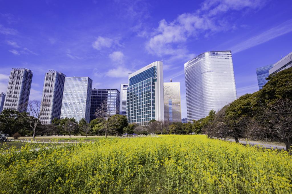 hamarikyu gardens nanohana rapeseed flowers tokyo
