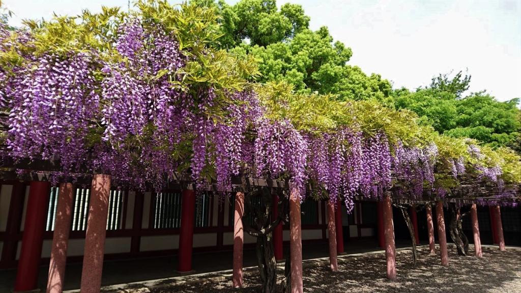 hie shrine wisteria tokyo flowers
