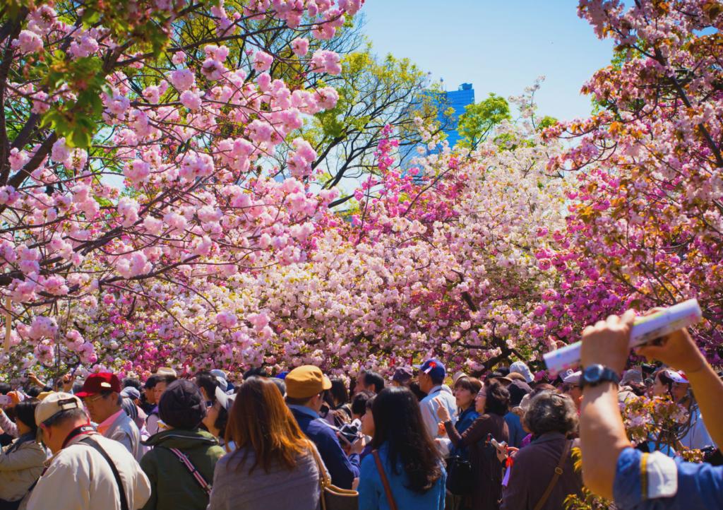japan mint sakura