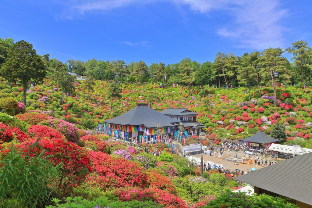 shiofune kannonji temple azalea tokyo