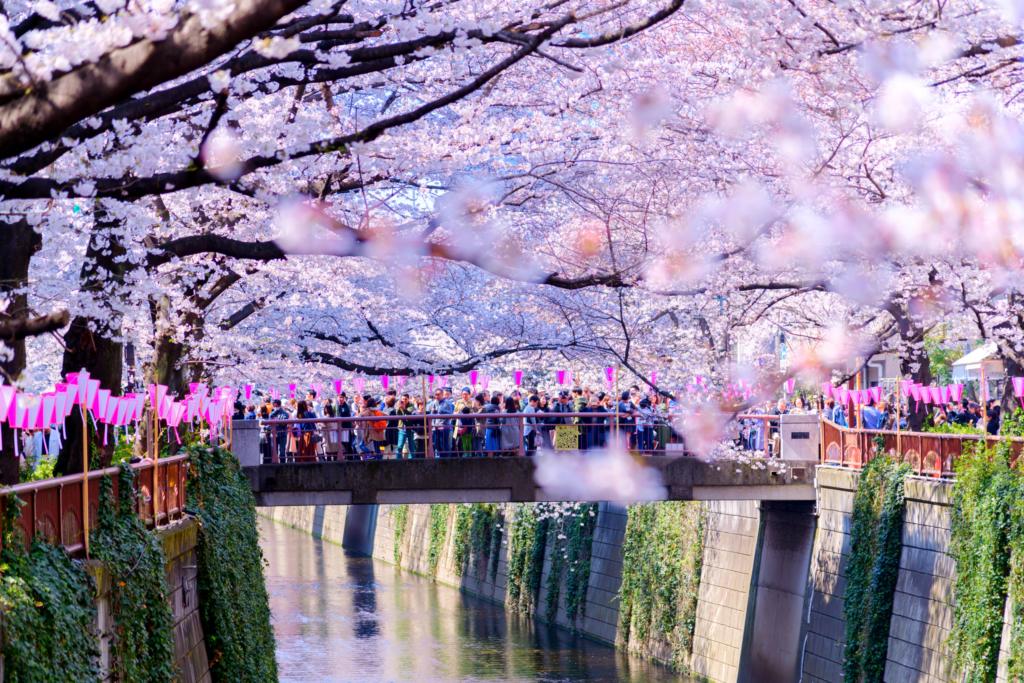 tokyo nakameguro canal sakura