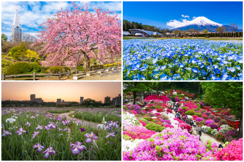 yearly guide flowers bloominf in tokyo