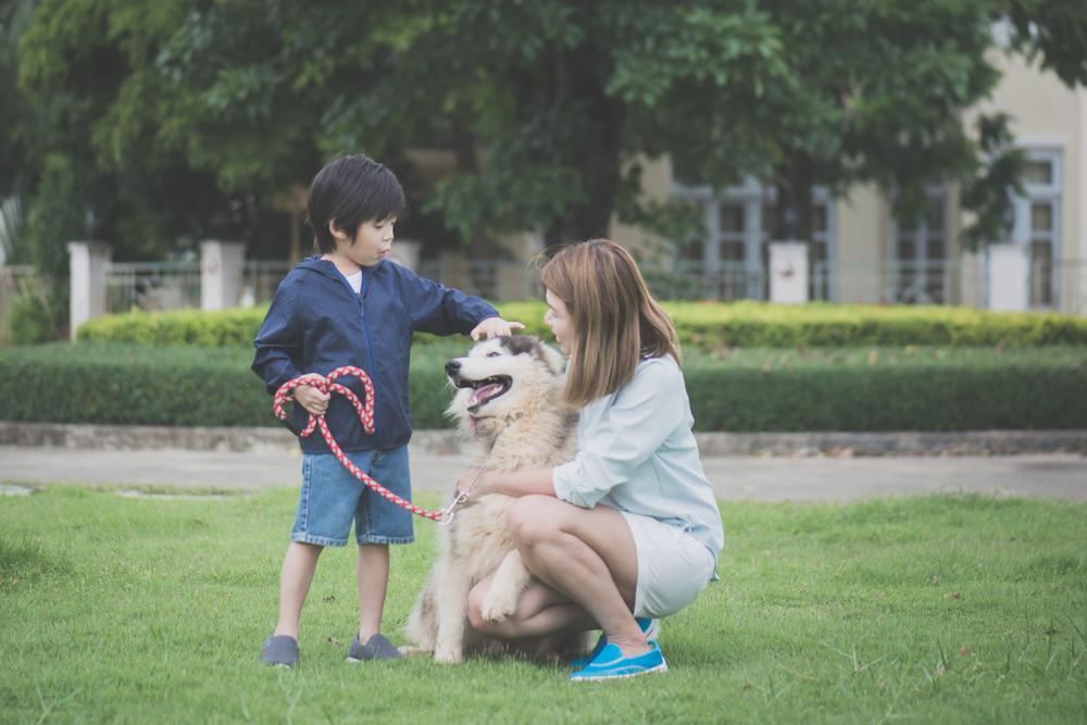 bring your pet in japan pet etiquette